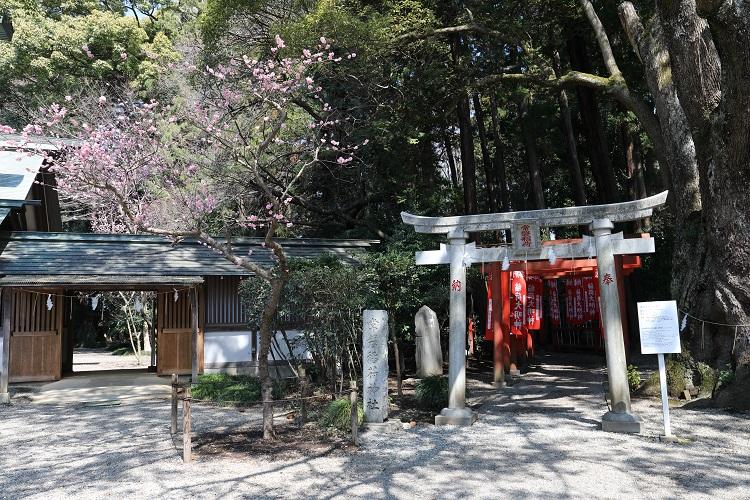 偕楽園常盤神社鳥居と梅の花